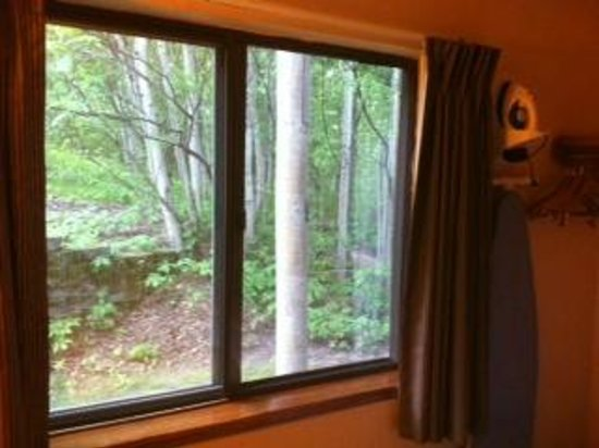 Americas Best Value Inn : Ground floor woodland view