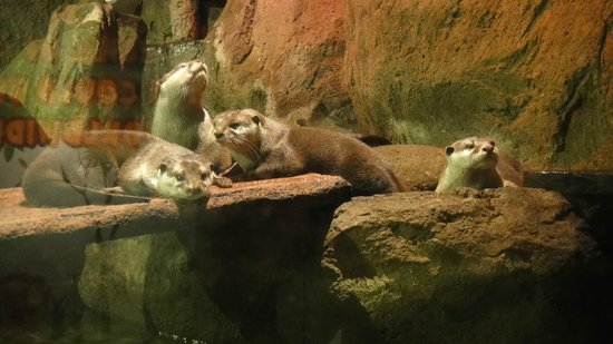 Aquaria KLCC: The otters