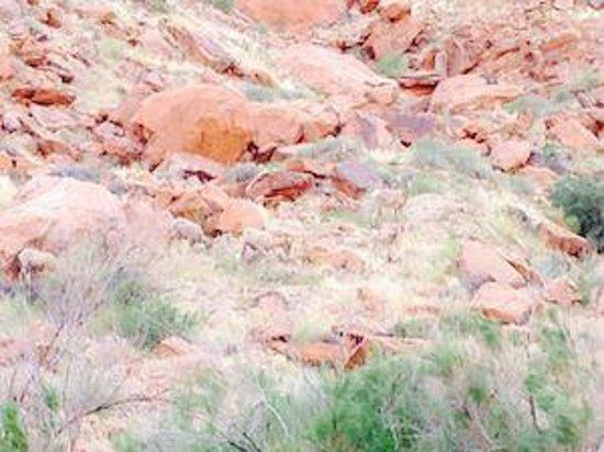 Colorado River Discovery: Big Horn Sheep