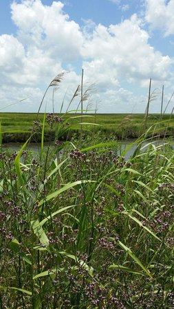 Creole Nature Trail: Marsh