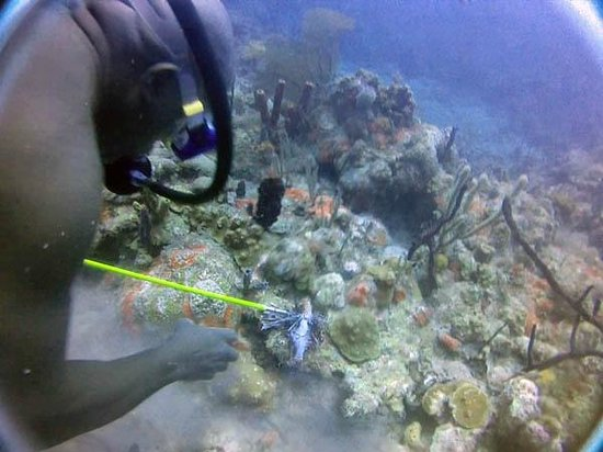Kenneth's Dive Center: Kenny pulverizing Lionfish and feeding other fish-