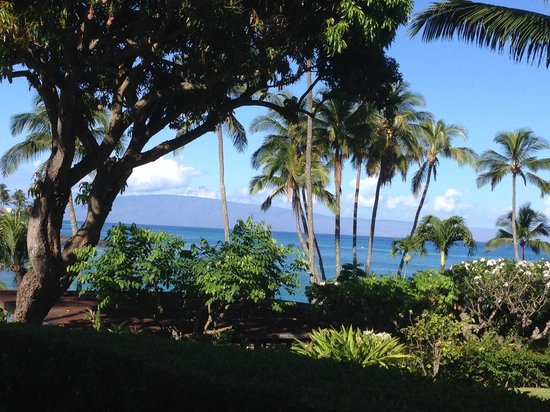 Napili Kai Beach Resort : Lush property