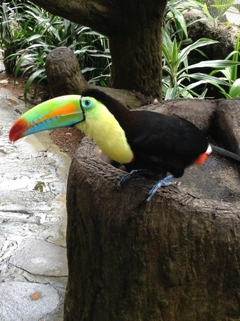 Peace Lodge: Favorite Toucan