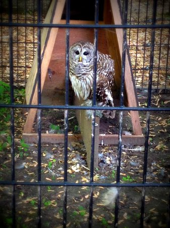 Bay Beach Wildlife Sanctuary: An adorable owl