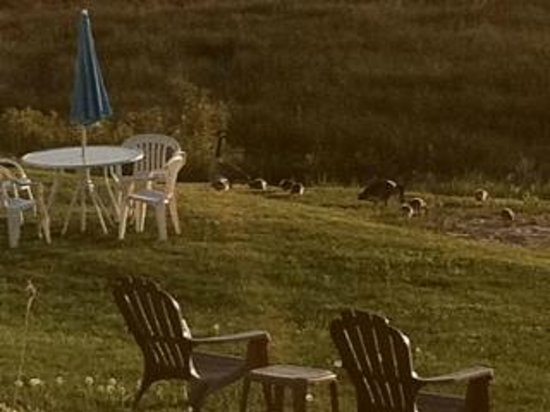 Bay View Motel: Water fowl on lawn