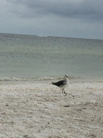 JW Marriott Marco Island Beach Resort: wildlife