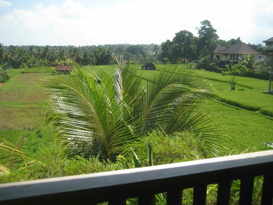 Honeymoon Guesthouses: Rice field view from Room 38