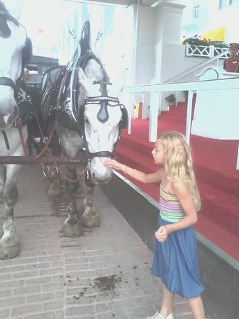 Grand Hotel: Jenna Loved all the beautiful horses!