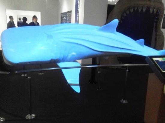 Rias Shark Museum : 海の市屋内