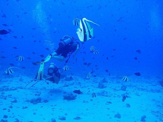 """Te Mara Nui Plongee: A l'exté""""rieur de la passe"""
