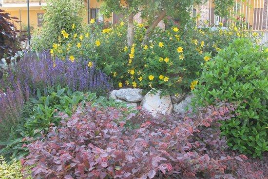 Torre in Langa : I fiori del giardino