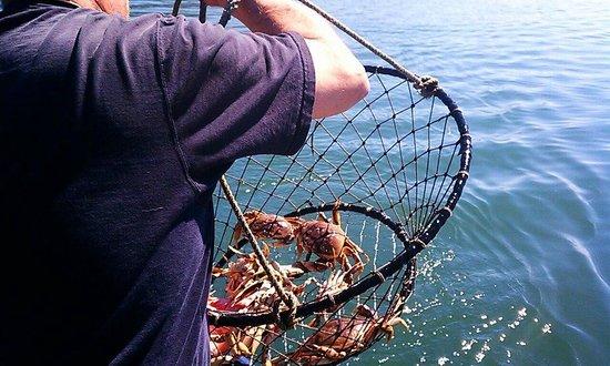 Kelly's Brighton Marina: Crab ON!!!