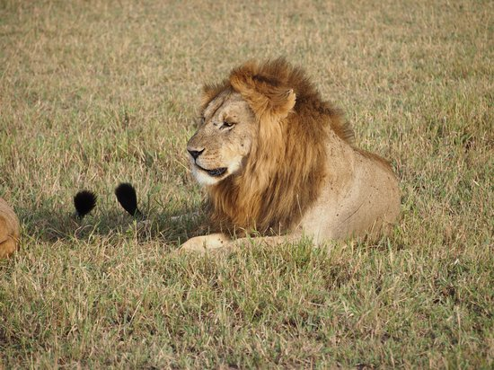 andBeyond Grumeti Serengeti Tented Camp : King of the Jungle