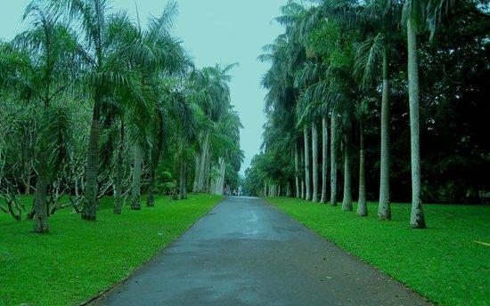 Royal Botanical Gardens: Paths