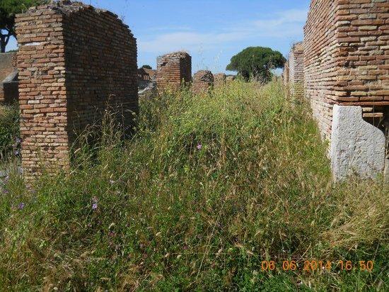 Ostia Antica: L'erbaccia vince...