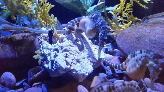 Dallas World Aquarium: fish