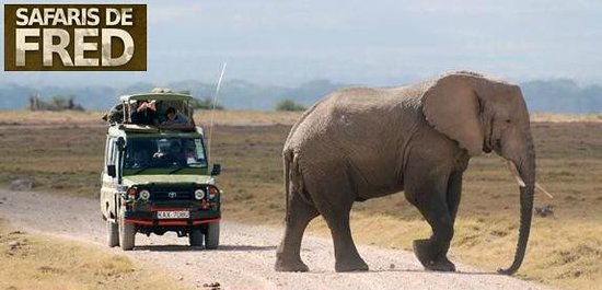 Aventure Safaris