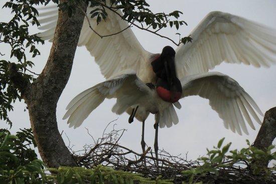 Araras Pantanal Ecolodge: Birds