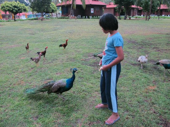 Sibu Island Resort: Feeding activities