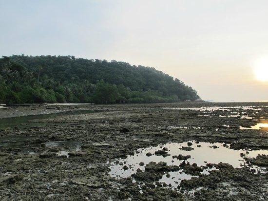 Sibu Island Resort: Dead corals at Beach No. 4