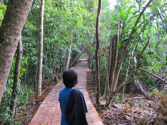 Sibu Island Resort: Half way to Jungle Trekking