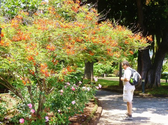 Presidential Palace Garden : exotic trees