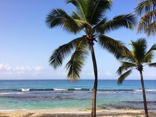 Viva Wyndham Dominicus Beach : Vista dal ristorante