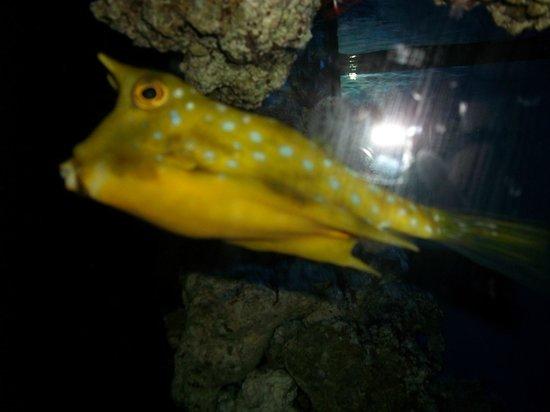 Pez globo creo bild fr n roquetas de mar aquarium Aquarium en roquetas de mar