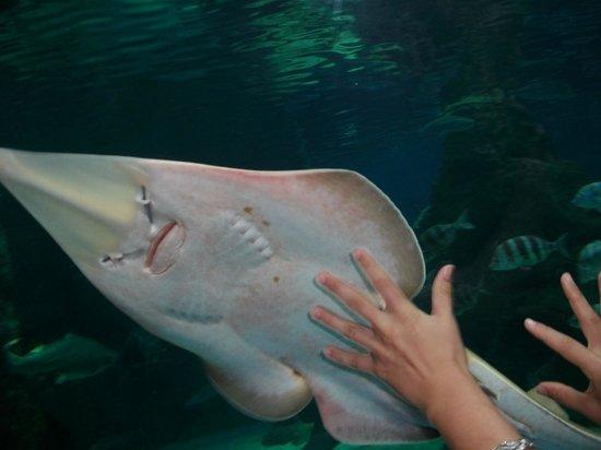 Tiburon Raya Fotograf A De Aquarium Roquetas De Mar