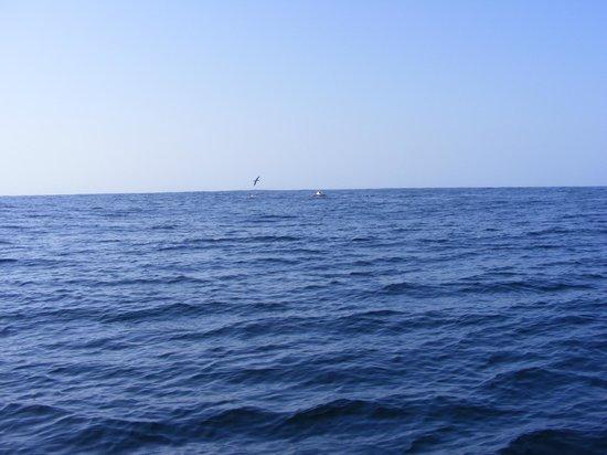 Advantage Tours and Charters: Albatross & Humpback