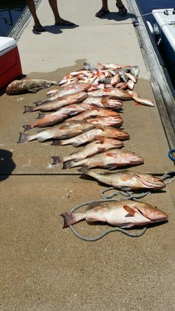 Saltwater Cowboy Charters: Great day of fishing on the saltwater cowboy with captain Dickey