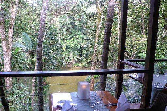 Silky Oaks Lodge: Blick vom offenen Restaurant auf den Fluss