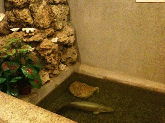 Seafest Hotel: Indoor pond with arapaimas - they're huge despite this pic size