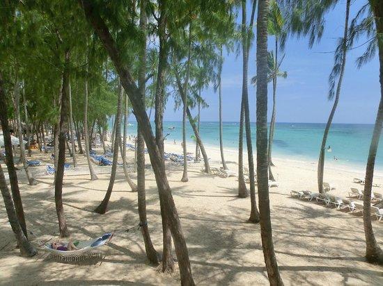 Vista Sol Punta Cana : Strand