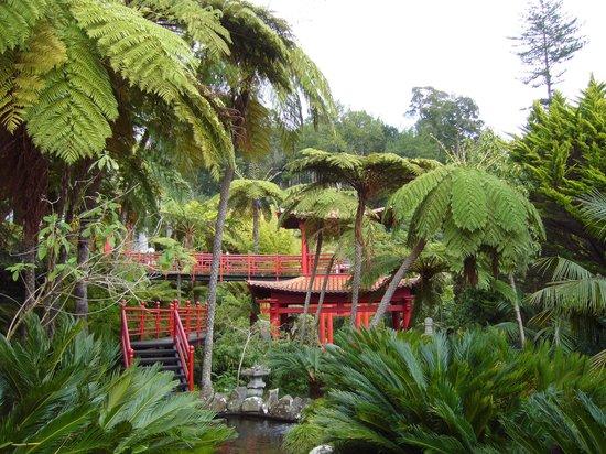 Monte Palace Madeira : du rouge sur du vert