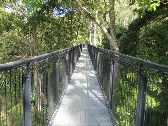 Tamborine Rainforest Skywalk: On the skywalk