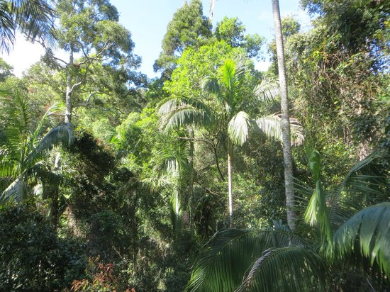 Tamborine Rainforest Skywalk: View across