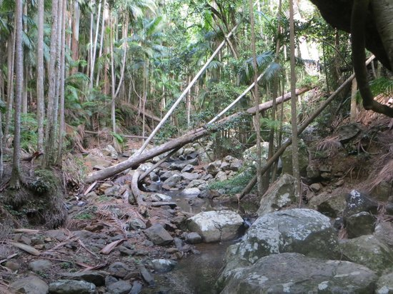 Tamborine Rainforest Skywalk: From the creek lookout