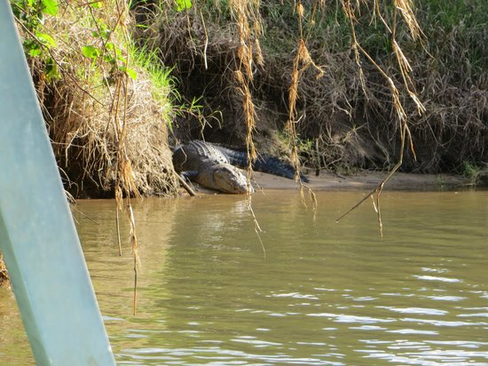 Crocodile Express Daintree River Cruises : From the boat