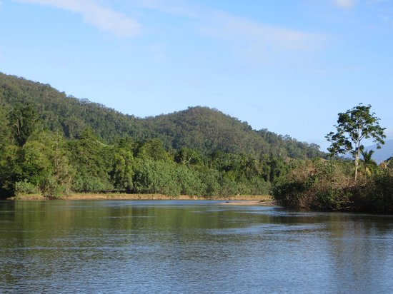 Crocodile Express Daintree River Cruises : Down river