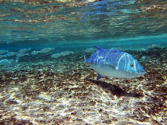 Reethi Beach Resort: snorkelling