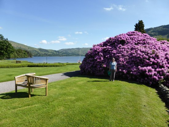 Inn on the Lake: Beautiful rhododendrons in the grounds.