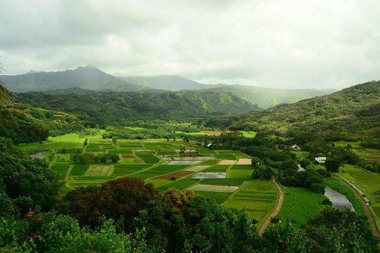 Kauai Photo Tours : Taro fields