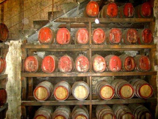 Tuscany Bike Tours: Wine cellar