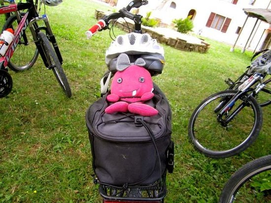 Tuscany Bike Tours: World Traveler, Lucy Toothy, came along for the entire ride.