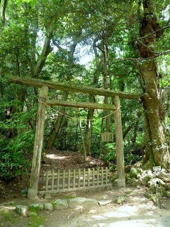 Keta Taisha Shrine: ご神体の「入らずの森」