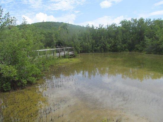 Las Cabezas de San Juan Nature Reserve: Paseo tablado entre mangles
