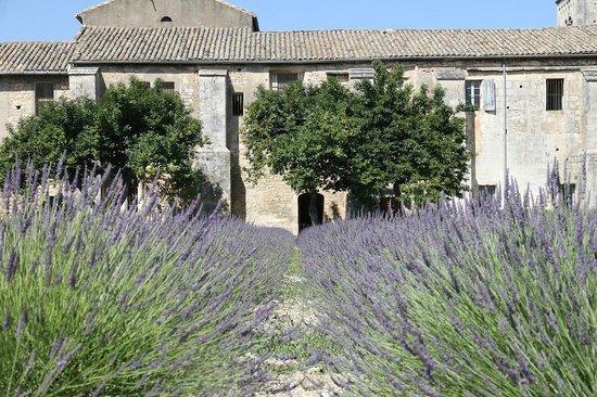 Saint-Paul de Mausole : Vincent's garden
