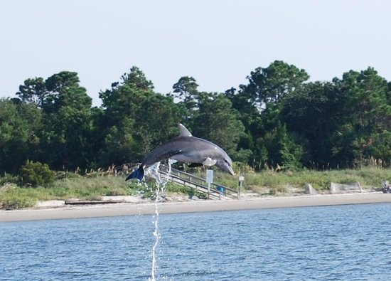 Captain Mike's Dolphin Tours : Best shot of the day