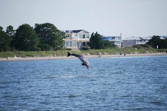 Captain Mike's Dolphin Tours : This guy entertained us for a good while